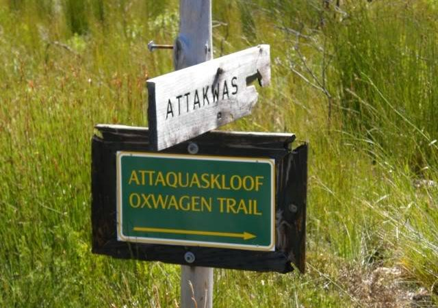 The OX-Wagon N1 Continued…